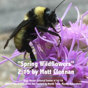 Bee on purple flower Matt Clennan Revised