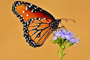 June Meeting – Natural Born Botanists: Plants from an insect's point of view @ Texas Discovery Gardens